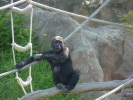 2011-05-08 Zoo Praha